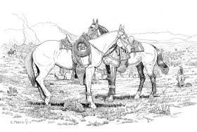 Horse Gear