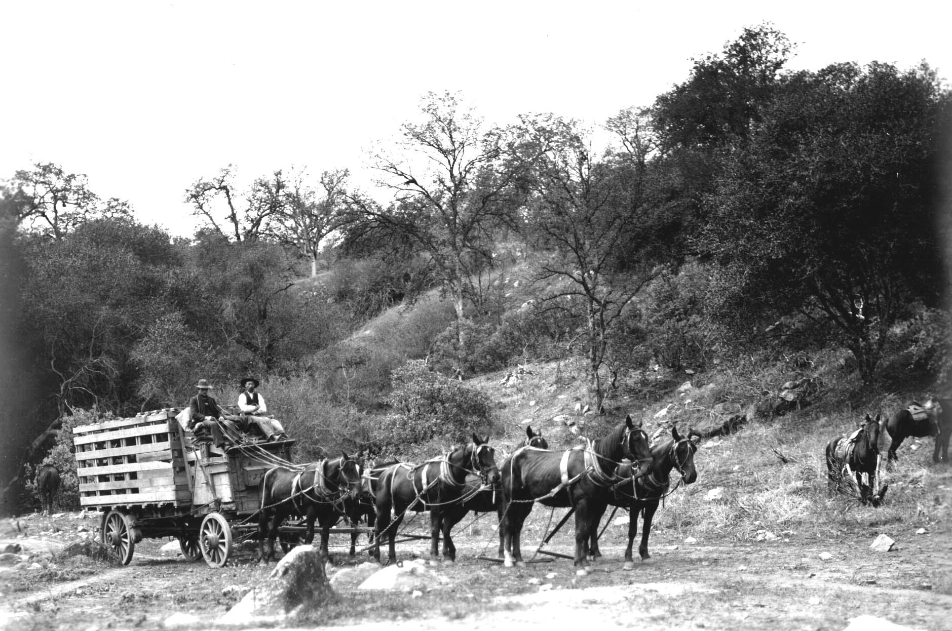 Hauling Elk on Wagon to Sequoia N Park
