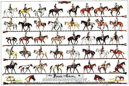Vaquero Poster