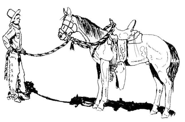 Preserving The Vaquero Tradition Some Thoughts On The Hackamore