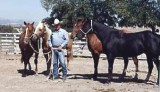 Ernie & his ranch horses