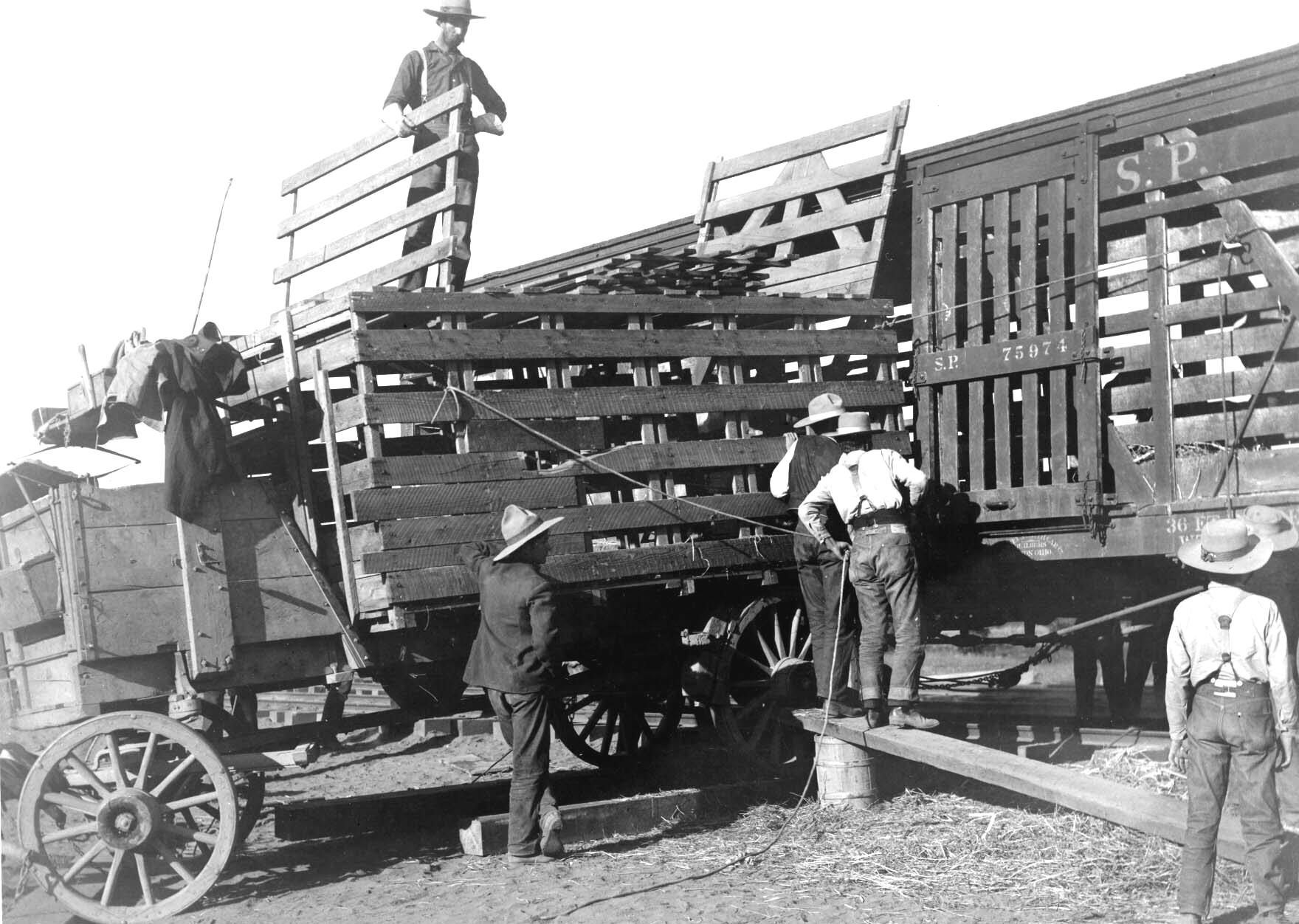 Tule Elk Roundup - Loading crates